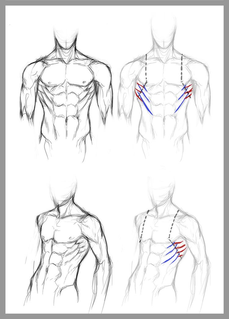 man body drawing - 689×960