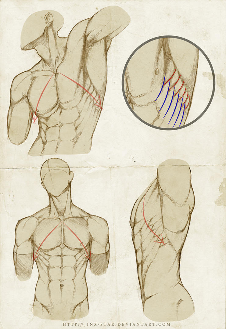 SERRATUS ANTERIOR : REDUX+ by jinx-star on DeviantArt