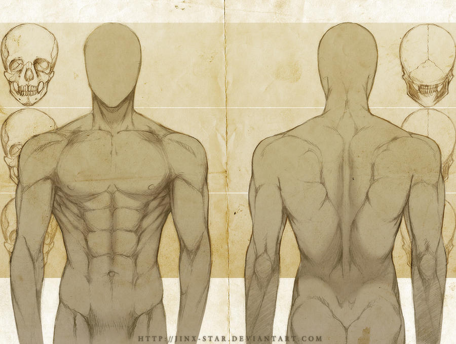 MALE ANATOMY: FRONT + BACK STUDY+ by jinx-star on DeviantArt