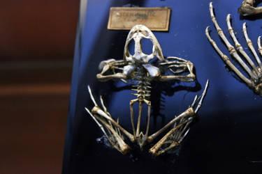 Museum d'Histoire Naturelle VIII by Doloresvselenium