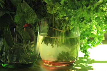 Le jardin temporaire by Doloresvselenium