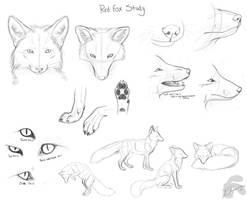 red fox doodles by Krissyfawx