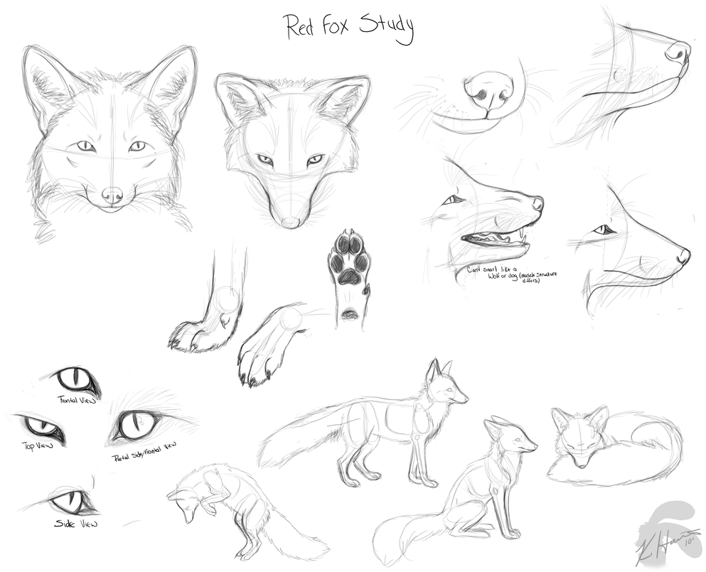 Fox Face Line Drawing : Red fox doodles by krissyfawx on deviantart