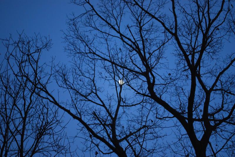 The Lunar Nestling by FlowerFreak