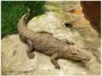 crocodilos