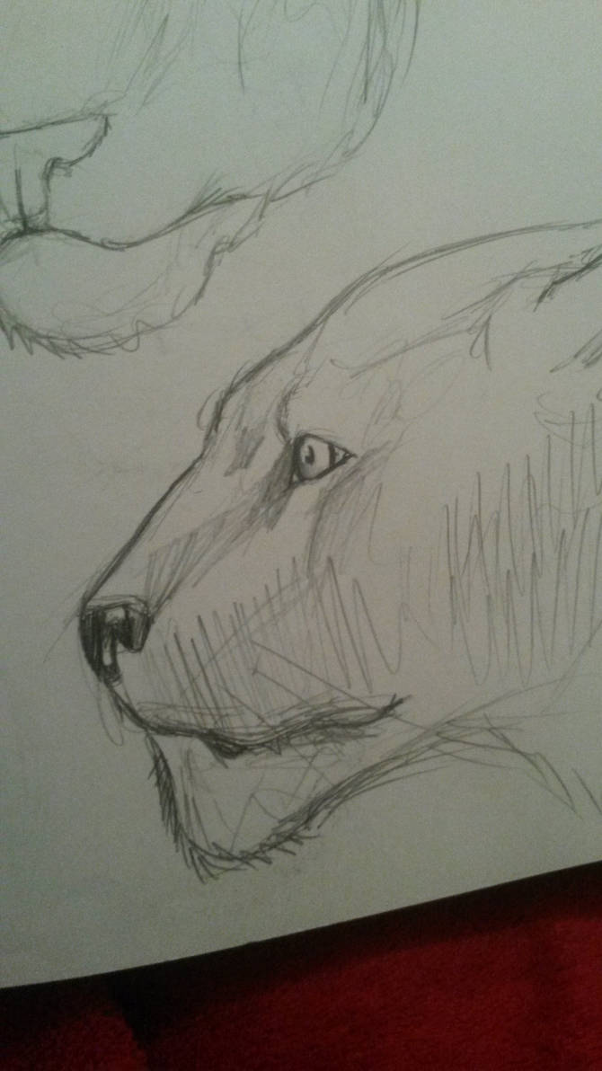 panther sketch by AMYisC0P1C