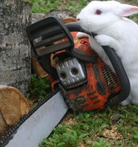 Emo-Bunny15's Profile Picture