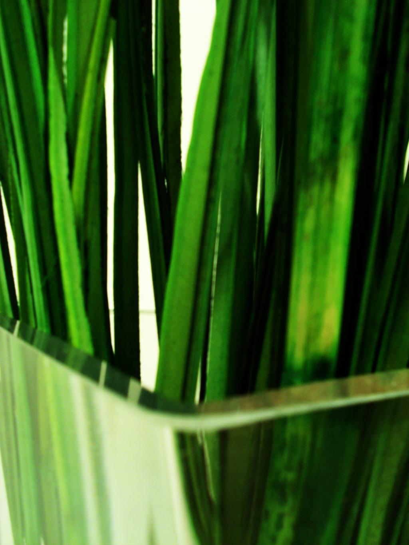 green_ by stormMajki