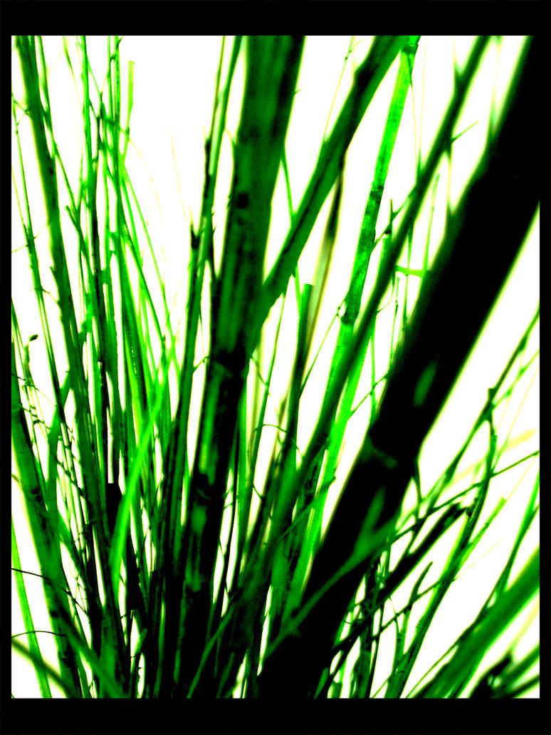 green by stormMajki