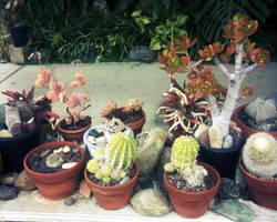 Cactus 3 by KnickKnacksStock