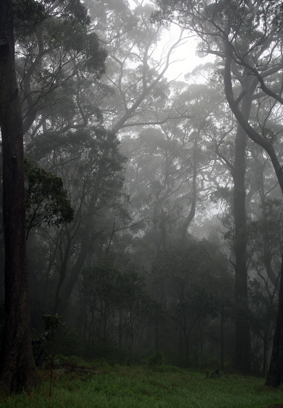 Inside a Cloud by Drakkaran