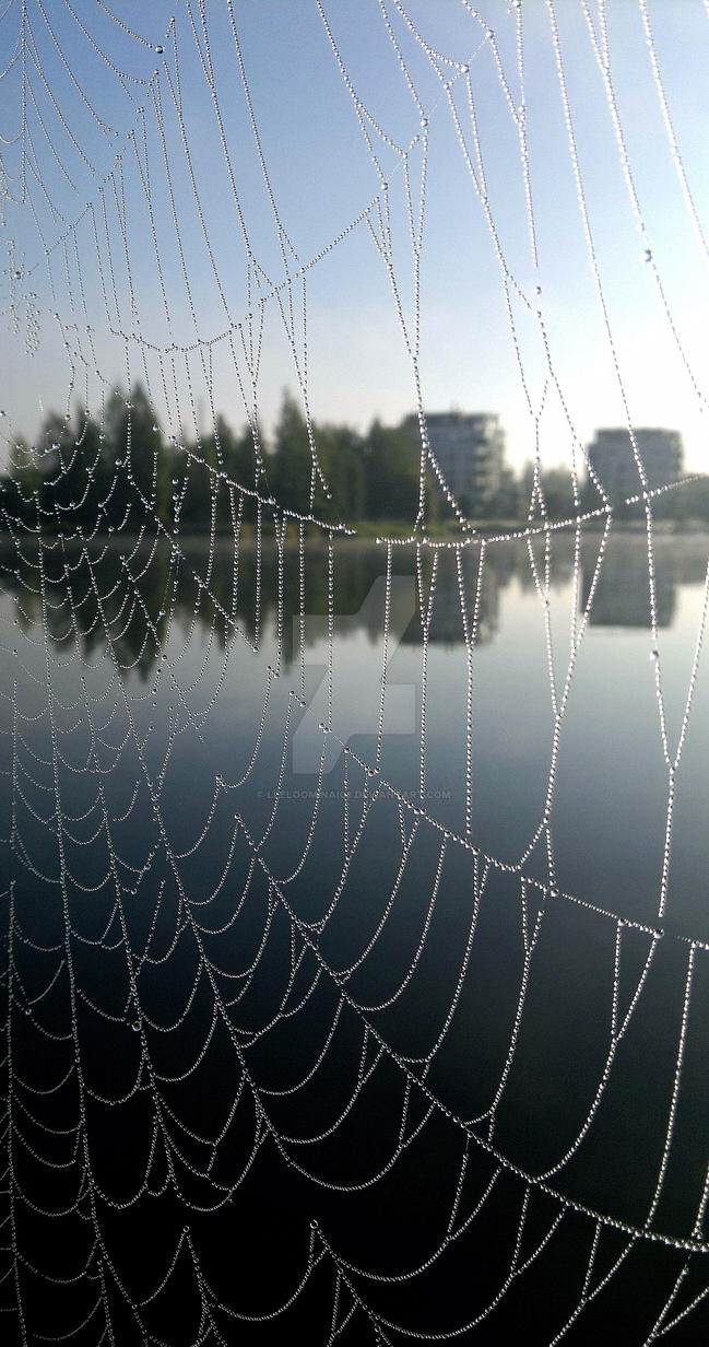 Spiderweb in a morning light 1 by Leeloominai08