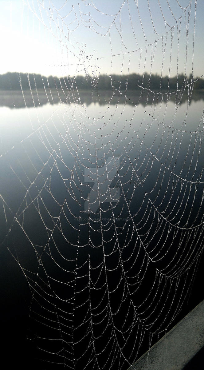 Spiderweb in a morning light 2 by Leeloominai08