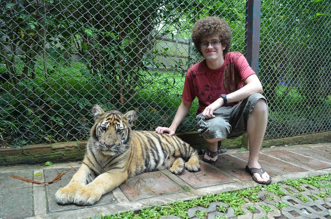 Tiger by blacknight12
