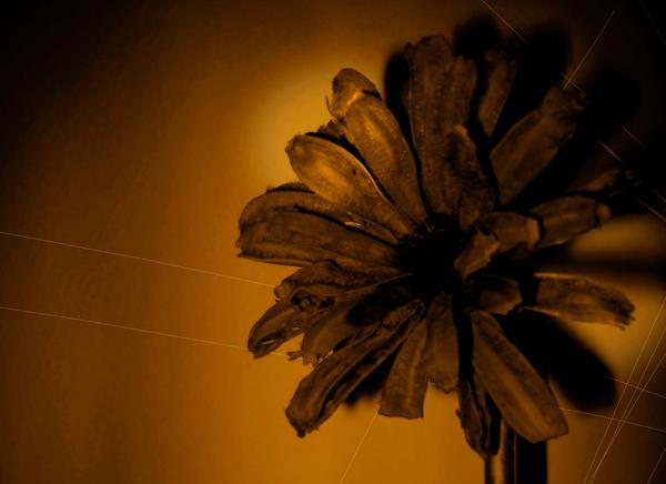 brown flower by Loora-Snape