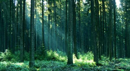 Dreamy Forest by Jabawock