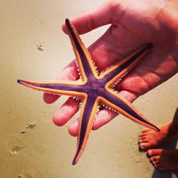 Seastar by Carogenius