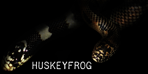 huskeyfrog's Profile Picture