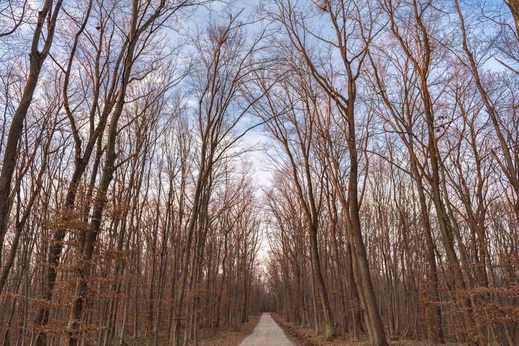 Woods by darkoantolkovic