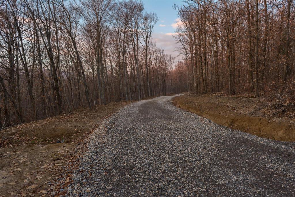 Forest Road by darkoantolkovic