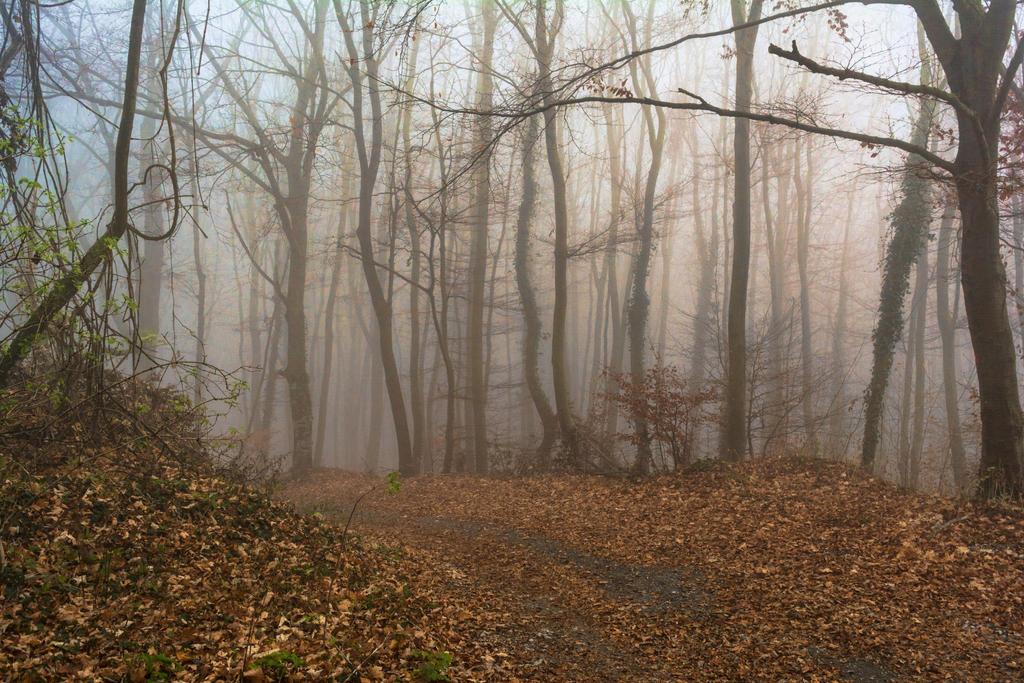 Foggy day by darkoantolkovic