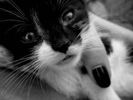 Kitten by Dunicika