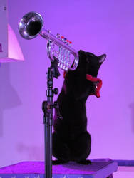 Trumpeting Kitty by BadCowboy69