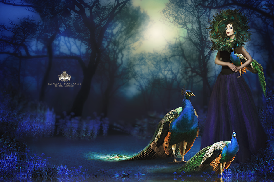 Peacock Queen by nikkiphoto46