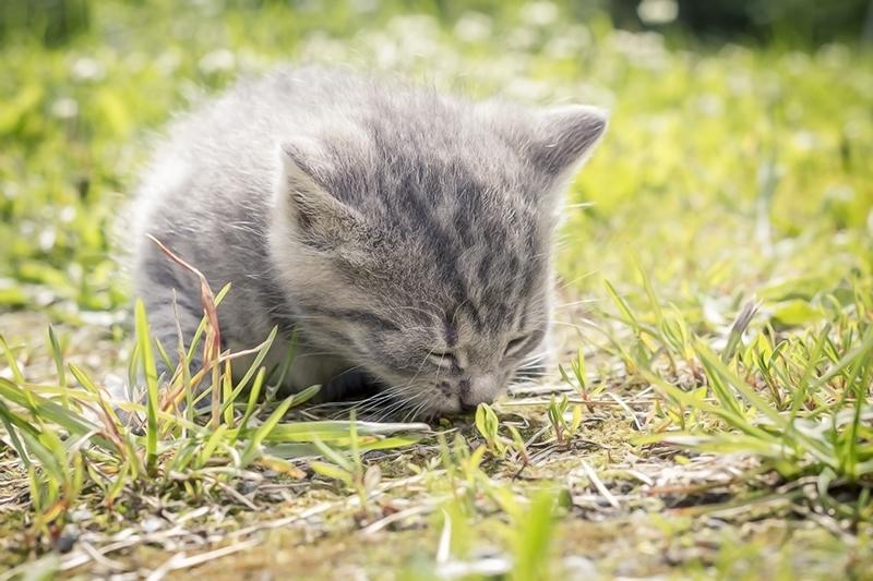 Sleeping Furball by Laazeri