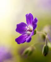 Flower by Laazeri