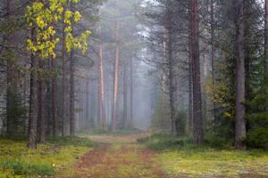 Misty Path II by Laazeri