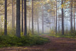 Misty Path III