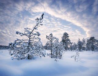 Winter Evening by Laazeri