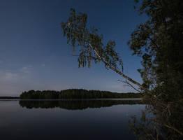 Moonlit Birch