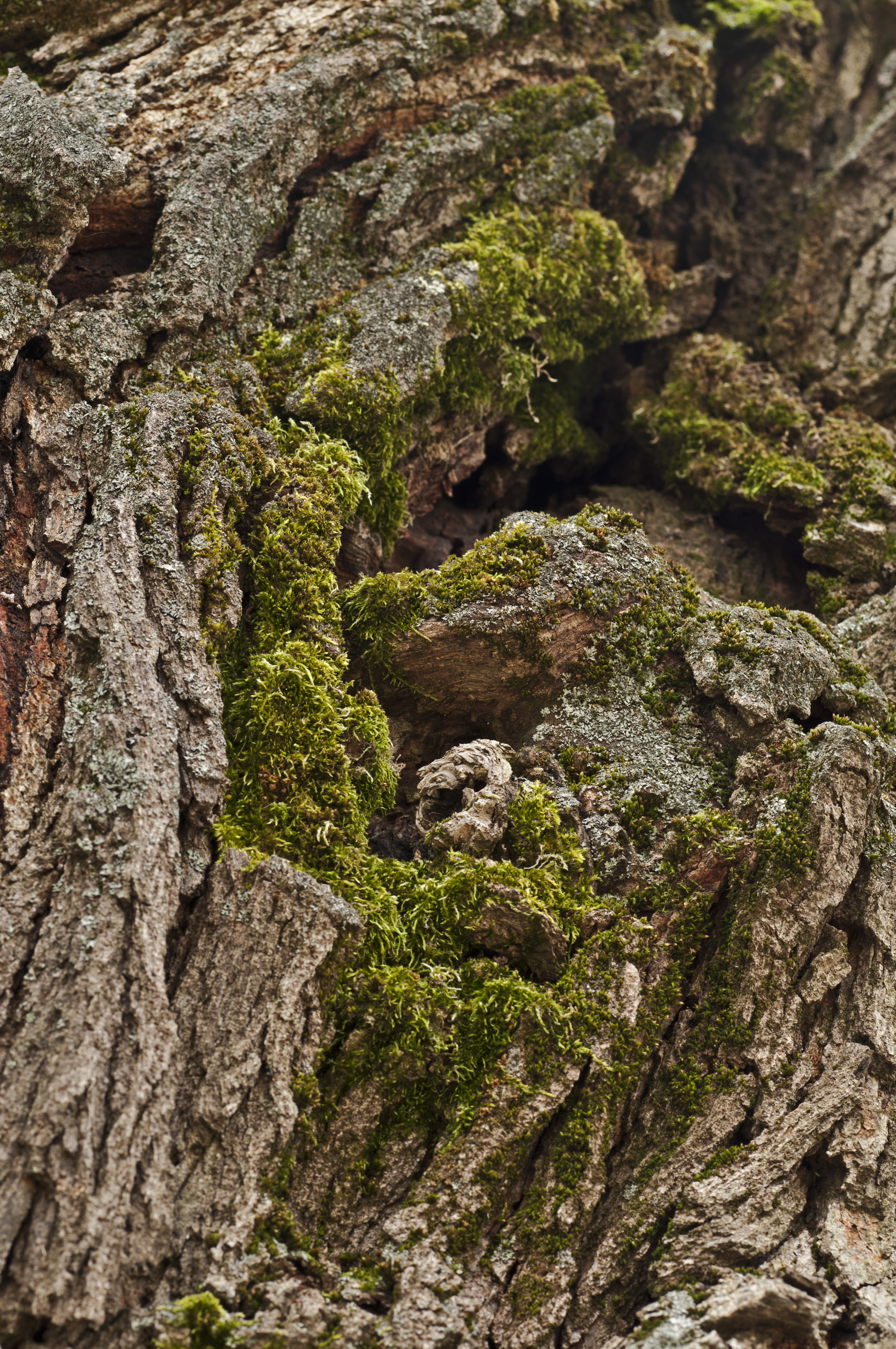 Moss covered old tree 39 s trunk by petertakacs on deviantart for What is a tree trunk covered with 4 letters