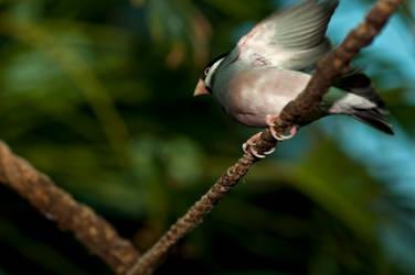 Upflying little bird by PeterTakacs