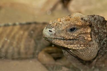 Reptile eyes by PeterTakacs