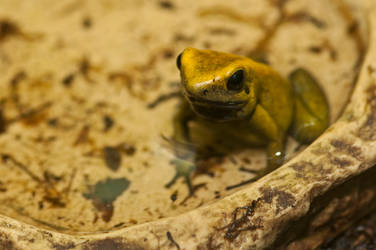 Sitting frog in the water by PeterTakacs