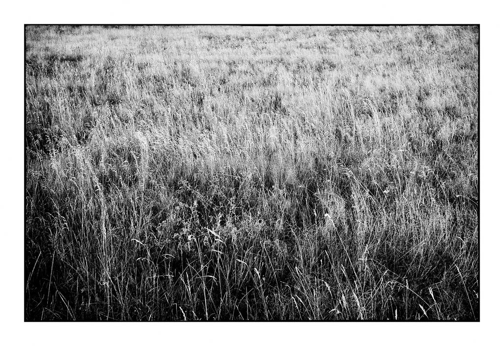 Grass-scape by thelizardking25