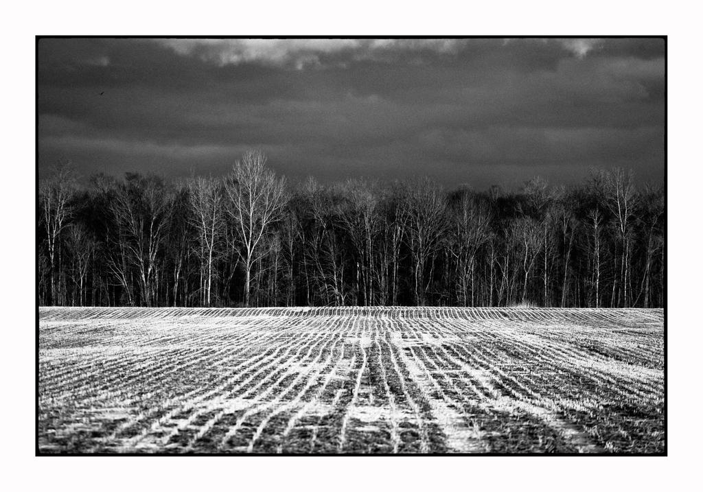 Winter Field - Ontario by thelizardking25