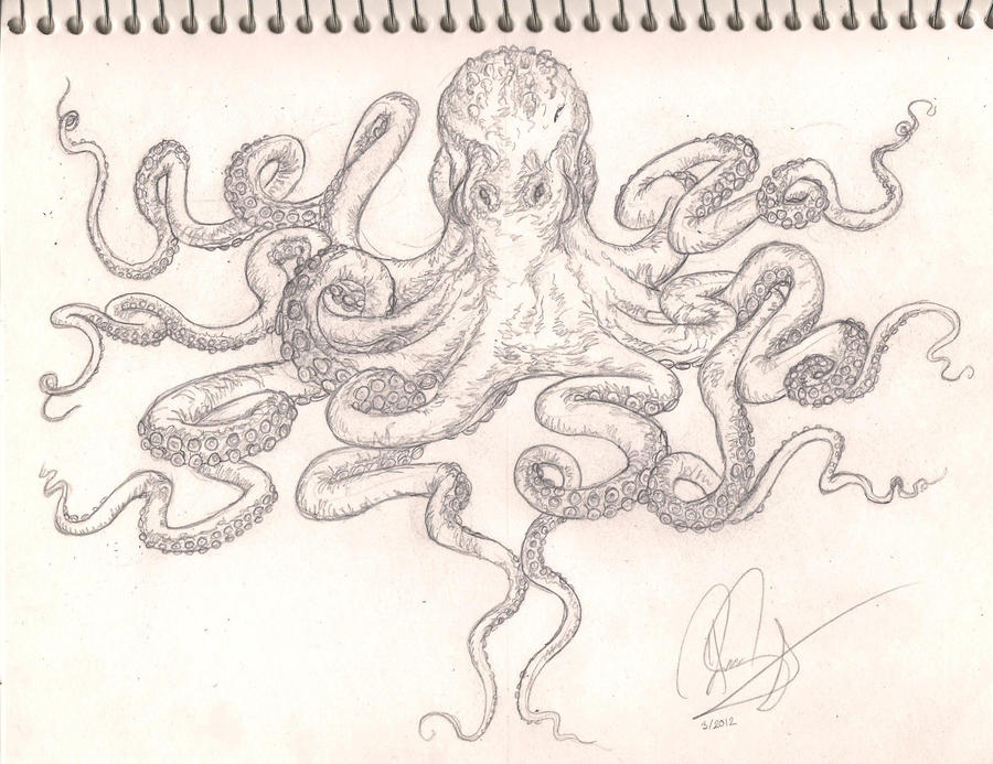 Octopus Chest Tattoo Flash/Sketch By Bass-Slinger On