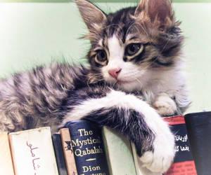 Qabalahist Cat by LordAras