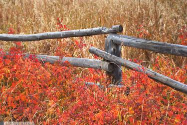 Autumn Posts by yenom