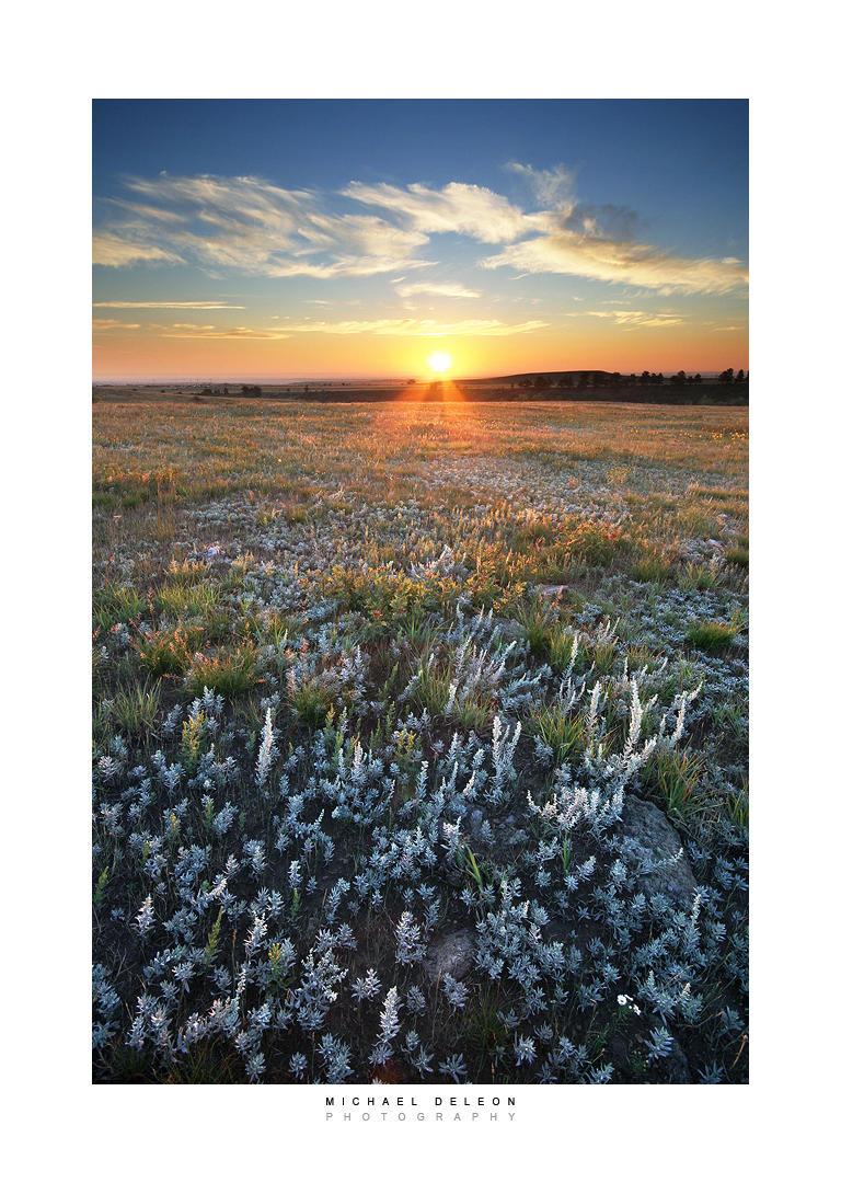 Sage Morning by yenom