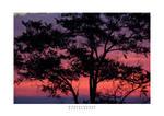Dawn Backdrop