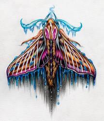 Moth by laurasusanna-art