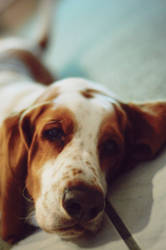 dog by granderoue