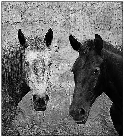 horses by wasted-photos