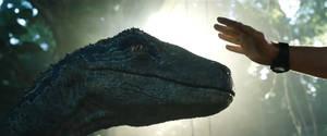 Jurassic World Fallen Kingdom-Blue 2