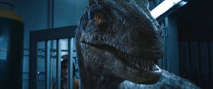 Jurassic World Fallen Kingdom-Blue 4